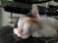ภาพลูดแมวที่เลี้ยงปัจจุบัน