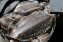 ปลาหมึกกระดองตัวนี้น้ำหนักประมาณเกือบ 2 กิโลกรัม/