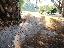 ภาพที่ 5  ที่สวนสาธารณะหนองบึก  จ.นครพนม