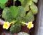 เจ้าดอกเหลืองที่น่าสงสาร ไม่ต้องออกดอกตลอด แต่ช่วยรักษาต้นแกไว้ด้วย