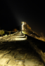 ชมกำแพงเมืองจีนซือหม่าไถยามค่ำคืน