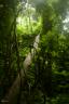 """""""ดุลยภาพที่สอดคล้องในนิเวศของป่าดิบชื้น เบื้องล่างน้ำตกเหวนรก"""" (อุทยานแห่งชาติเขาใหญ่)"""