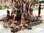 ใต้ต้นโพธิ์  มีพระพุทธรูปสีดำ
