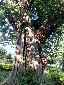 ภาพที่ 7  สวนสาธารณะเทิดพระเกียรติ  จ.นครพนม